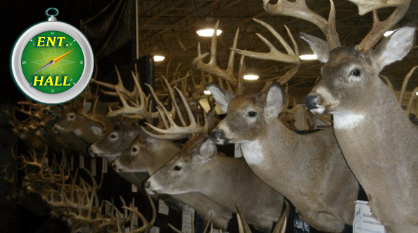 Big Buck Display