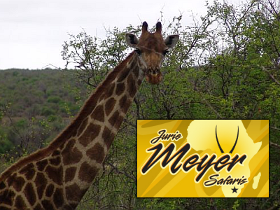 Jurie Meyer Safaris