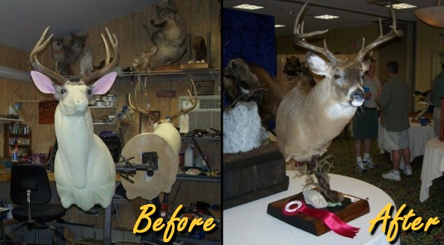 Before and After | Taxidermy